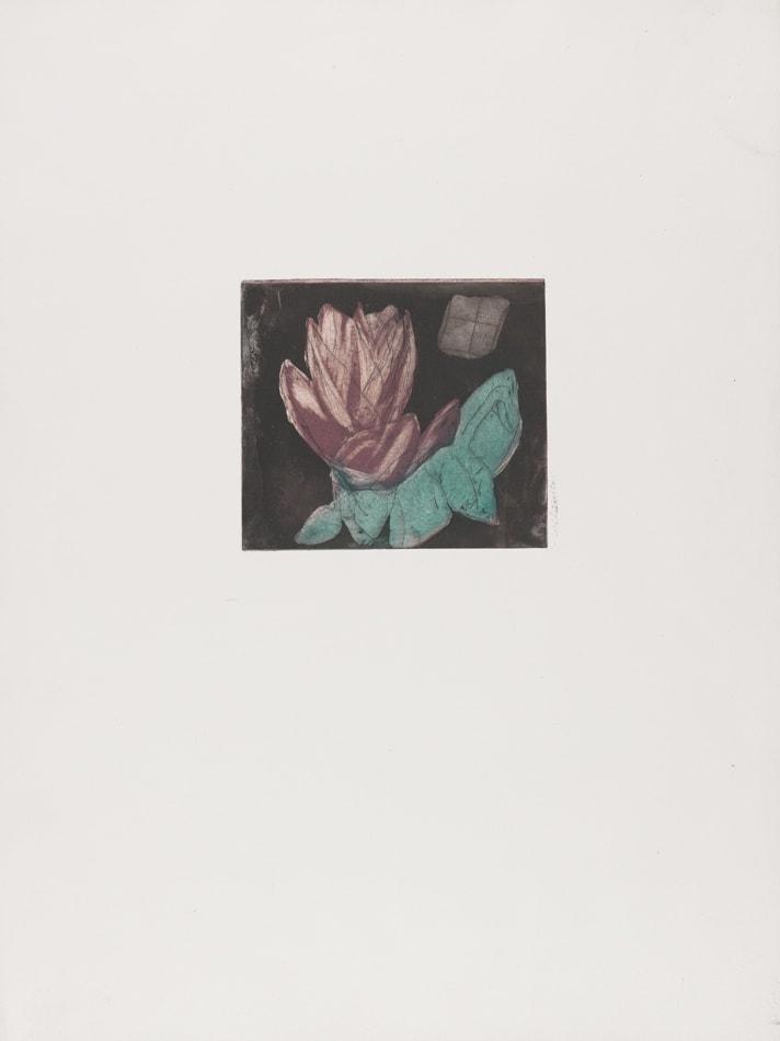 Gravures de David Kennedy - Artiste Peintre Paris : fleur fanée 1