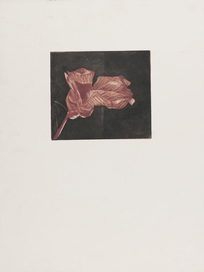 Gravures de David Kennedy - Artiste Peintre Paris : fleur fanée 2