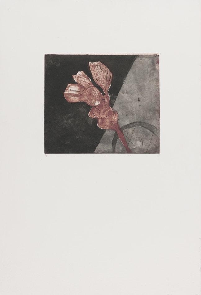 Gravures de David Kennedy - Artiste Peintre Paris : fleur fanée 3